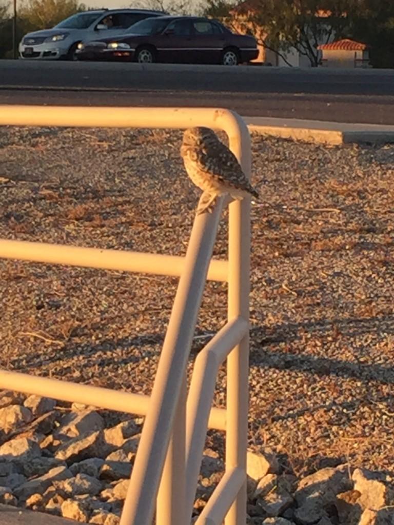 tiny owl sitting on railing