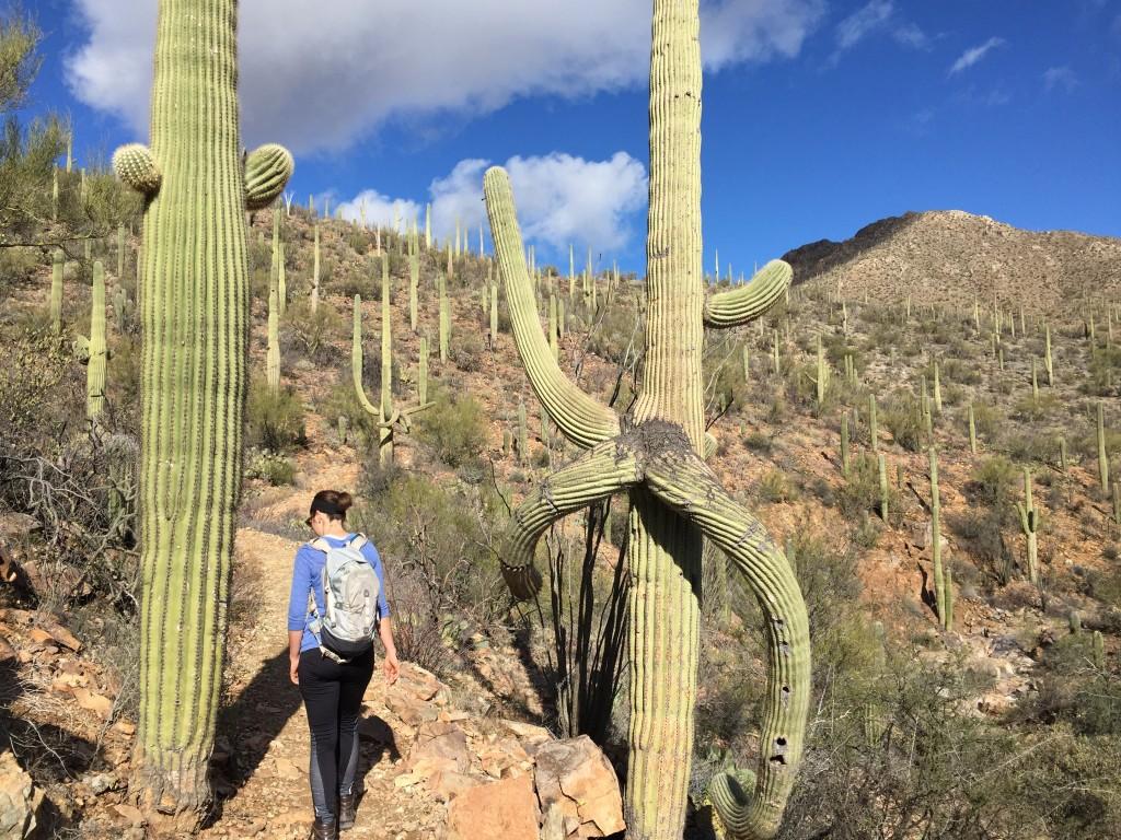 Hiking among the Saguaro