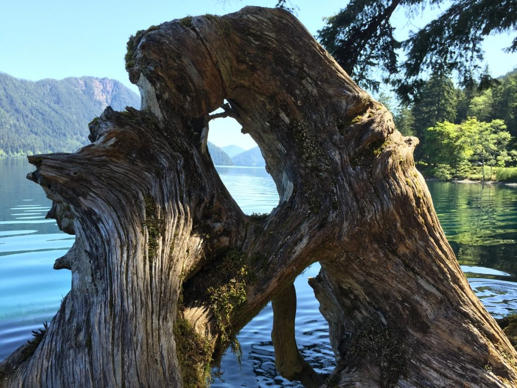 Lake Crescent through a root